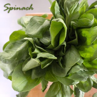 Vegetable of the Month: Spinach