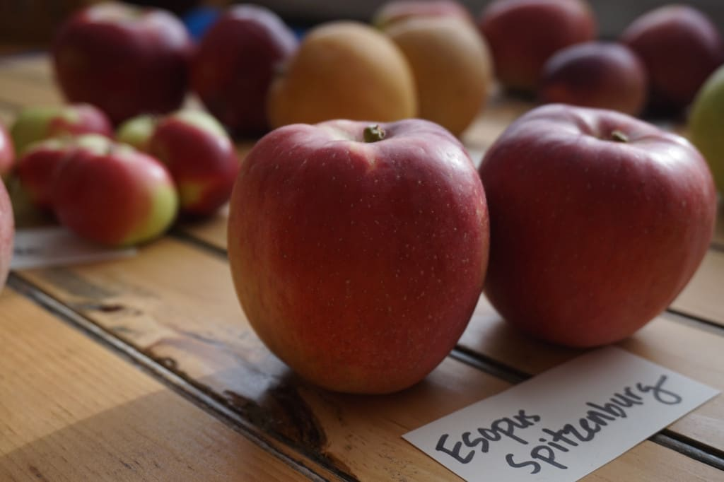 Esopus Spitzenberg Heirloom Apples
