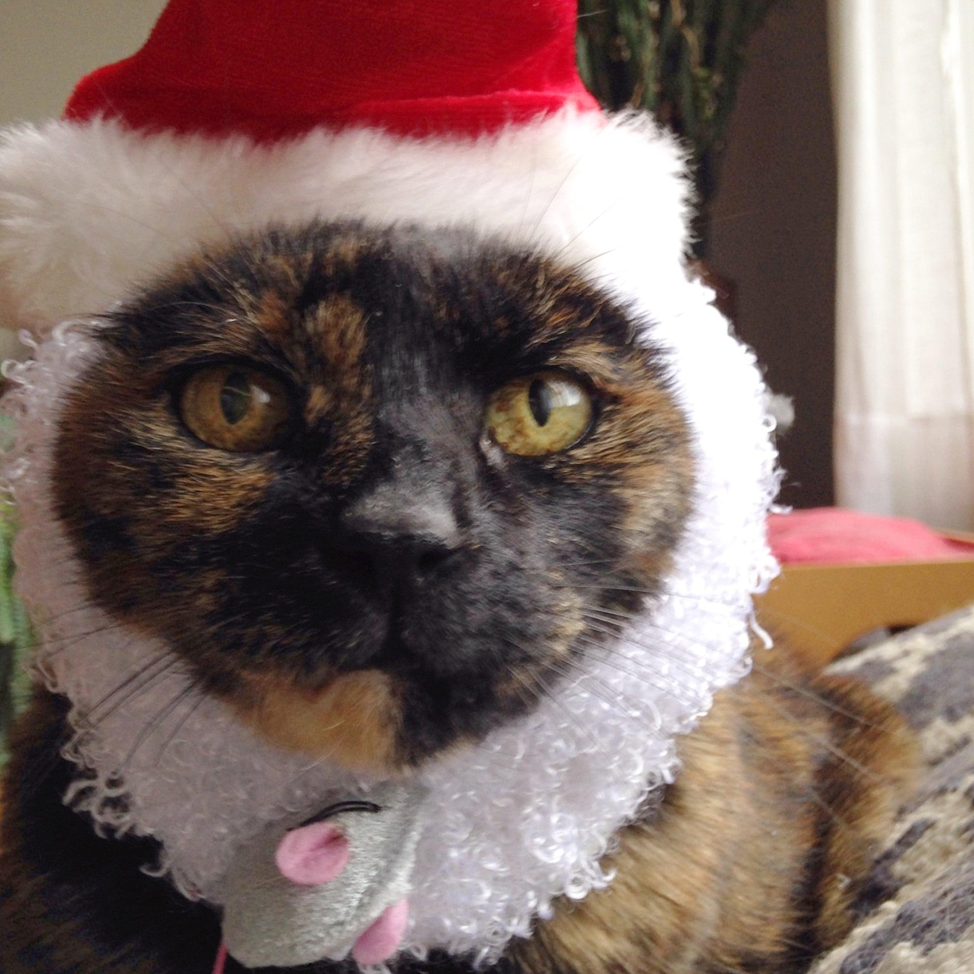 Roo Christmas