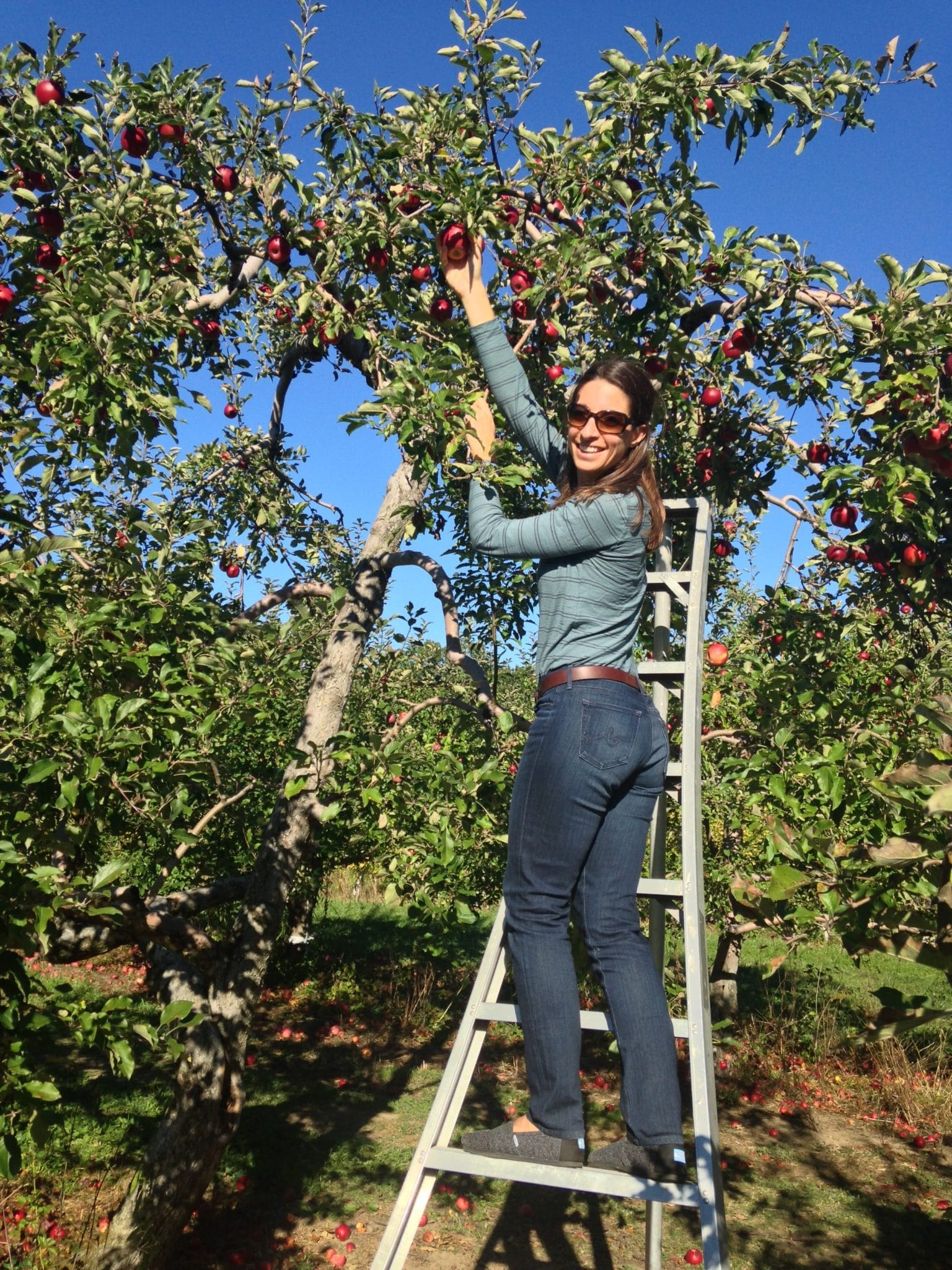 picking apples in upstate new york