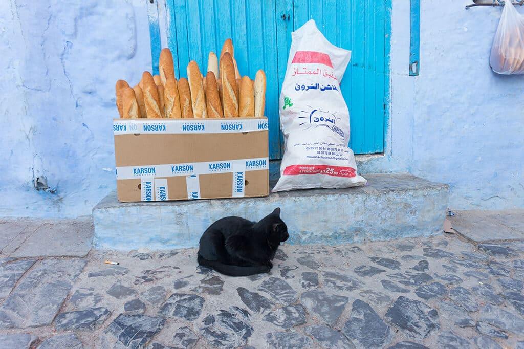 Cats of Morocco, Chefchaoeun, Morocco
