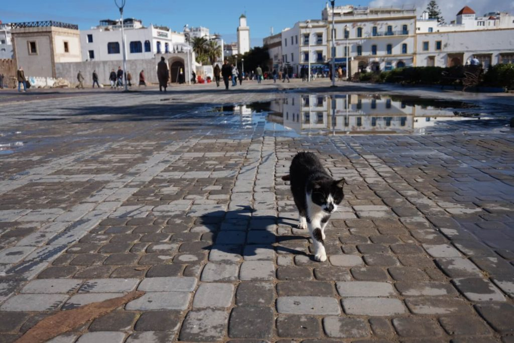 Cat Walking, Essaouira, Main Square