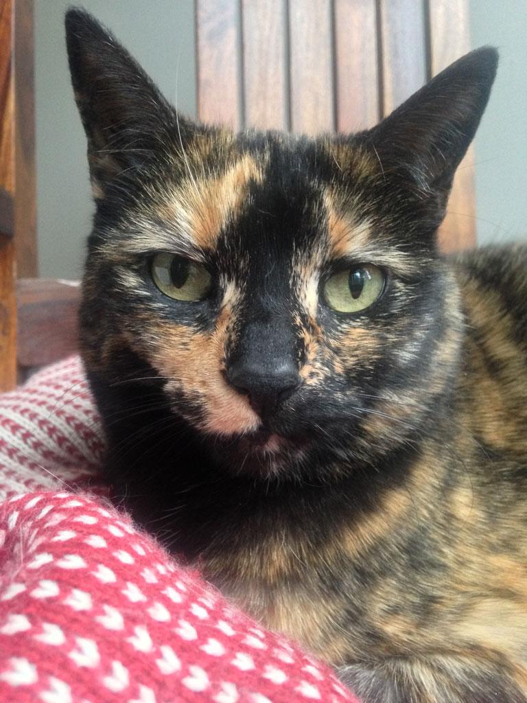 Della, our cat