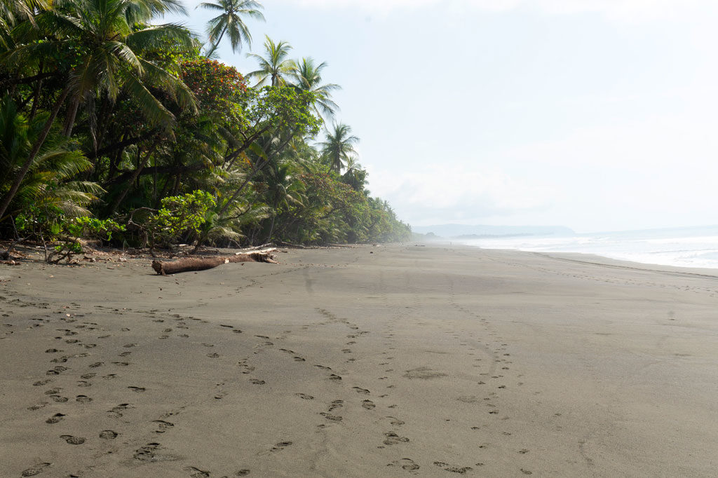 Corcovado National Park Beach