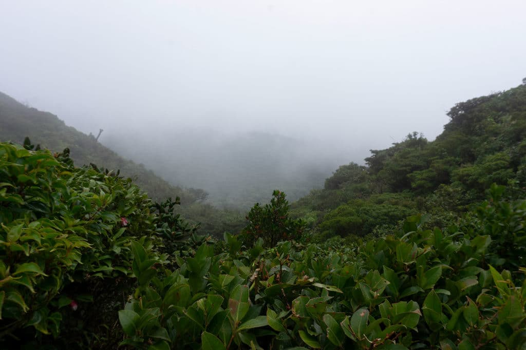 Cloud Forest - foggy top